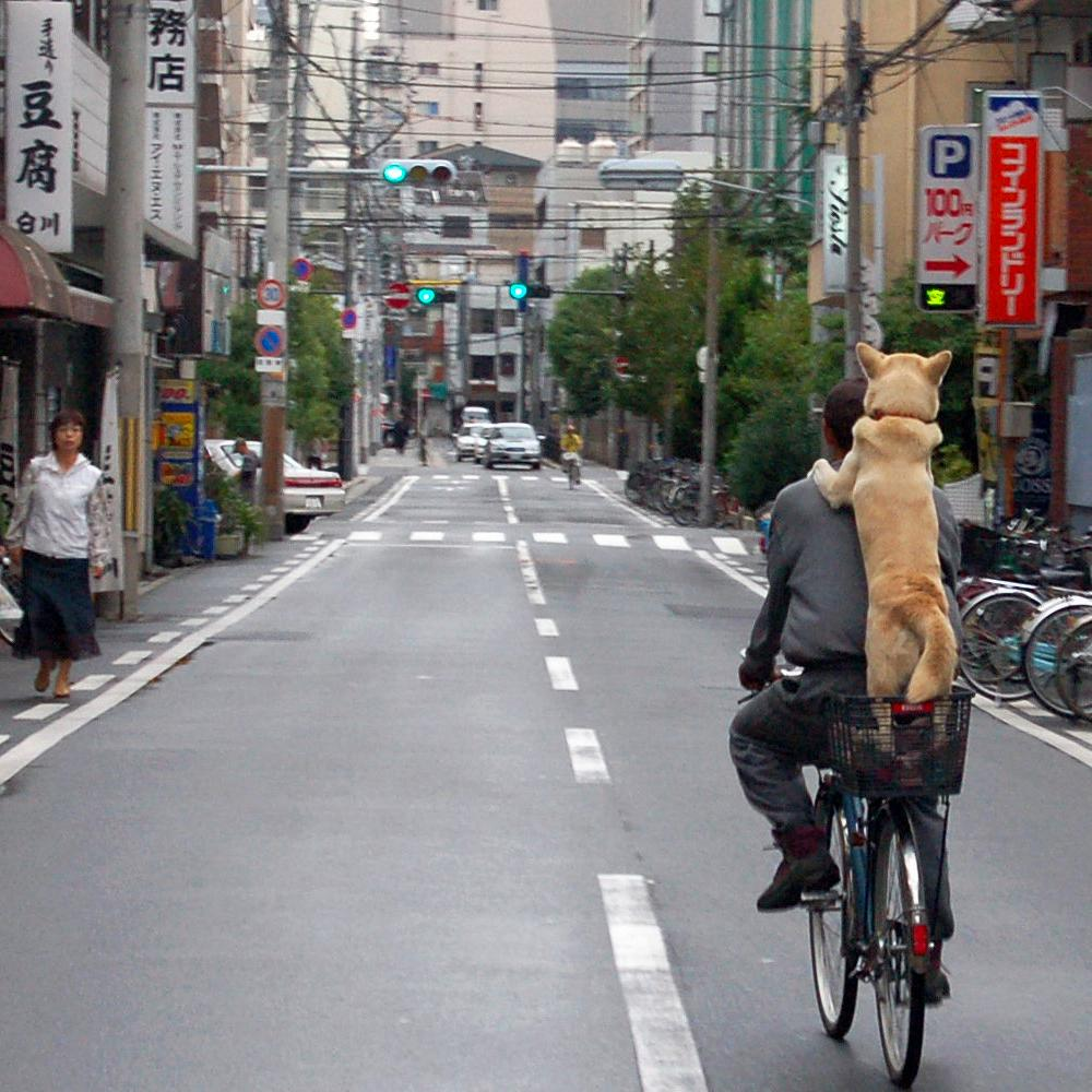 Dog on Bike
