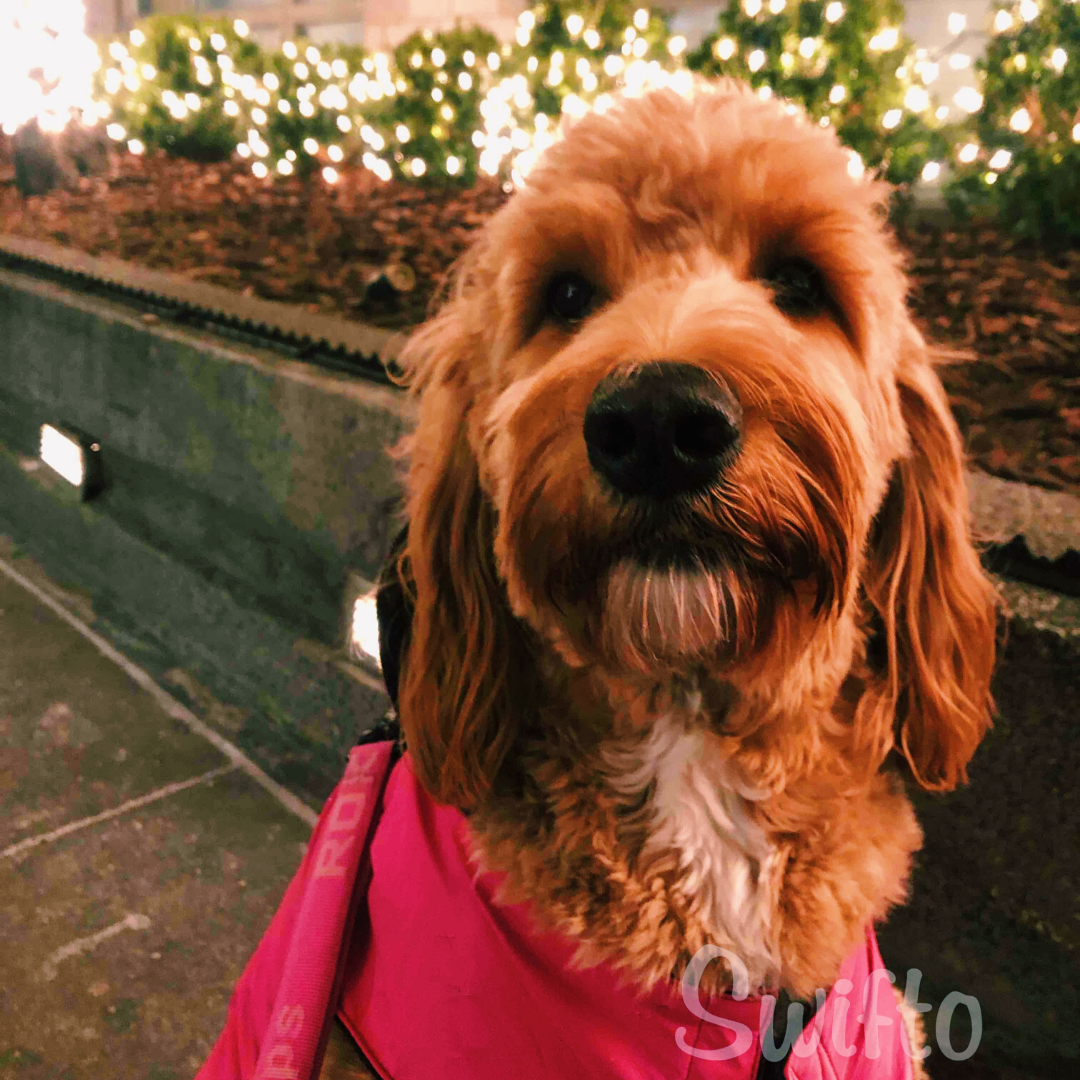 Dog attire for every type of weather